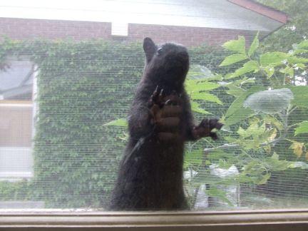 My lil squirrel gets a nutt - 1 4