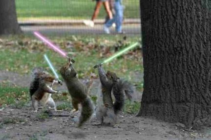normal_jedi-squirrels.jpg