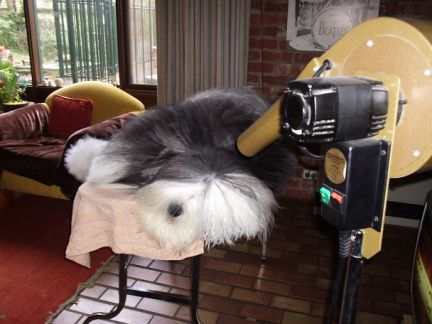 Dog grooming dryers do you need a special dryer image solutioingenieria Choice Image
