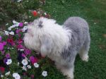 beauford smelling the flowers .jpg